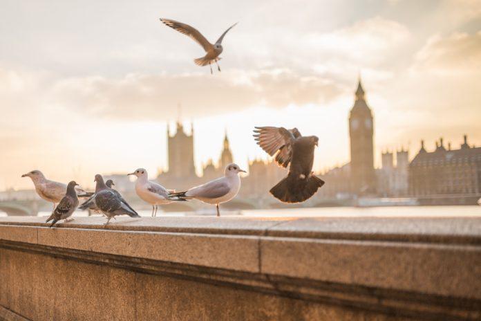 10 najczęściej odwiedzanych atrakcji turystycznych Londynu•