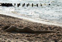 Domki nad morzem - europejski standard w bałtyckich realiach